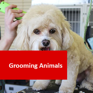 Grooming Animals 100 Hours Certificate Course