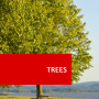Trees Courses Online