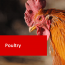 Fowl Play – Picking your Poultry Course