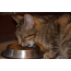 Why Feeding Cat's Dog Food Isn't Safe