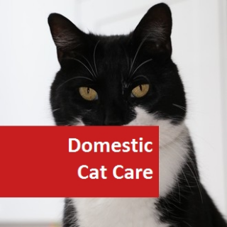Domestic Cat Care 100 Hours Certificate Course