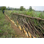 Hedgelaying Tips
