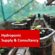 Hydroponic Supply & Consultancy - An Introduction 100 Hours Certificate Course