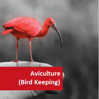 Aviculture (Bird Keeping) 100 Hours Certificate Course