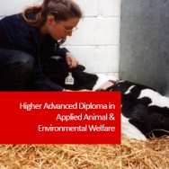 Higher Advanced Diploma in Applied Animal & Environmental Welfare