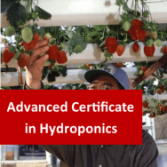 Hydroponics 400 Hours Advanced Certificate Course