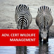 Advanced Certificate In Wildlife Management