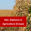 Agriculture (Crops) 800 Hours Advanced Diploma