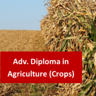 Advanced Diploma in Agriculture (Crops)