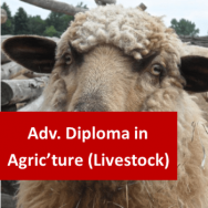 Advanced Diploma in Agriculture (Livestock)