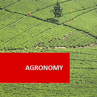 Agronomy 100 Hours Certificate Course