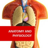 Anatomy and Physiology (Human Biology IA) (Pre-Medical Program)
