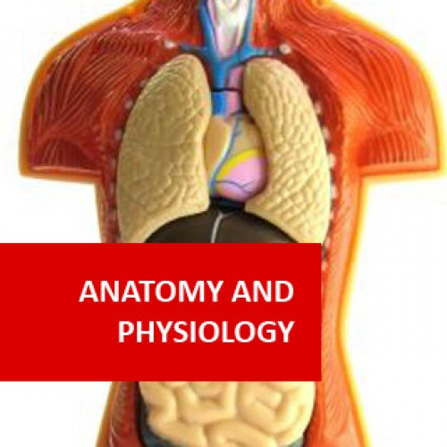Anatomy and human biology