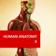 Human Anatomy II 100 Hours Certificate Course (Pre-Medical Program)