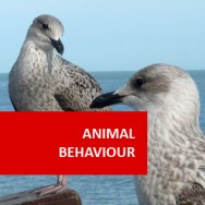 Animal Behaviour (Psychology of Animals)
