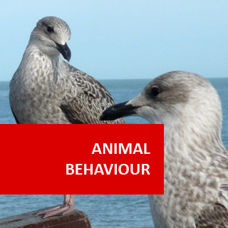 Animal Behaviour (Psychology of Animals) 100 Hours Certificate Course
