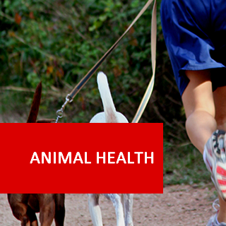 Animal Health 600 Hours Diploma