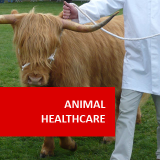 Animal Health Care 100 Hours Certificate Course