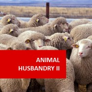 Animal Husbandry II - Animal Health 100 Hours Certificate Course
