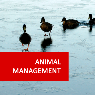 Animal Management 1200 Hours Higher Advanced Diploma