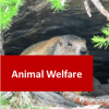 Animal Welfare 100 Hours Certificate Course