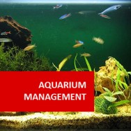 Aquarium Management 100 Hours Certificate Course