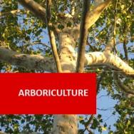 Arboriculture I (Basis)