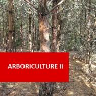 Arboriculture II (intermediate)
