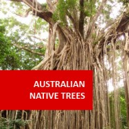 Australian Native Trees