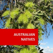 Australian Natives I