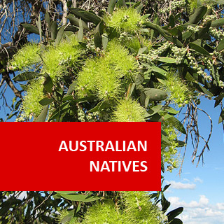 Australian Natives I 100 Hours Certificate Course