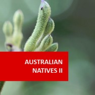 Australian Natives II