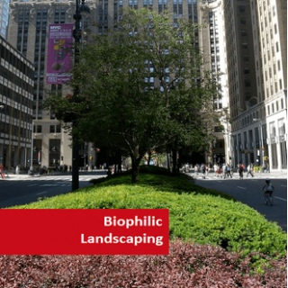 Biophilic Design and Landscaping 100 Hours Certificate Course