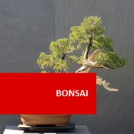 Bonsai Course