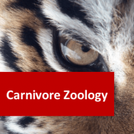 Carnivore Zoology 100 Hours Certificate Course