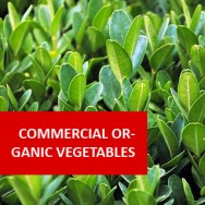 Commercial Organic Vegetable Growing 100 Hours Certificate Course