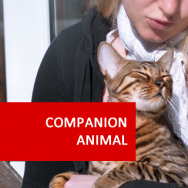Companion Animal Studies 600 Hours Diploma