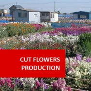 Cut Flower Production 100 Hours Certificate Course