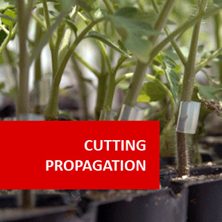 Cutting Propagation 100 Hours Certificate Course