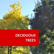Deciduous Trees 100 Hours Certificate Course