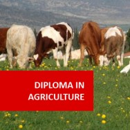 Agriculture 600 Hours Diploma