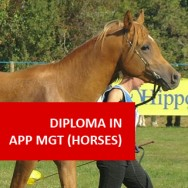 Diploma in Applied Management (Horses) VBS001
