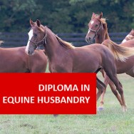 Diploma in Equine Husbandry VAG011