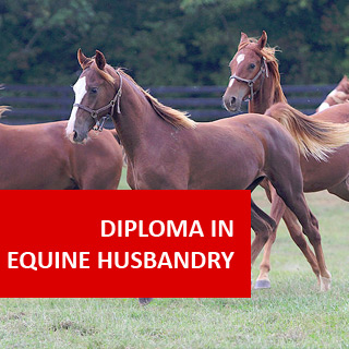 Equine Husbandry 600 Hours Diploma