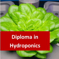 Hydroponics 600 Hours Diploma