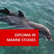 Diploma in Marine Studies
