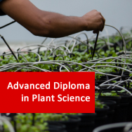 Advanced Diploma in Plant Science