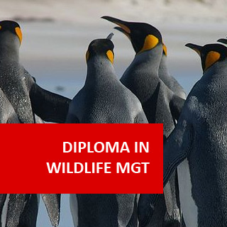 Wildlife Management 600 Hours Diploma