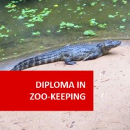 Diploma in Zoo Keeping