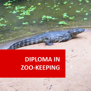 Zoo Keeping 600 Hours Diploma